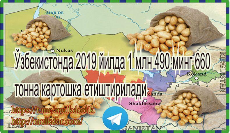Ўзбекистонда 2019 йилда 1 млн 490 минг 660 тонна картошка етиштирилади