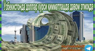 Ўзбекистонда доллар курси қимматлашда давом этмоқда
