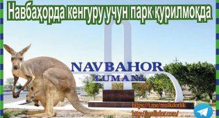 Навбаҳорда кенгуру учун парк қурилмоқда