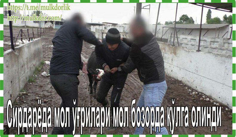 Сирдарёда мол ўғрилари мол бозорда қўлга олинди