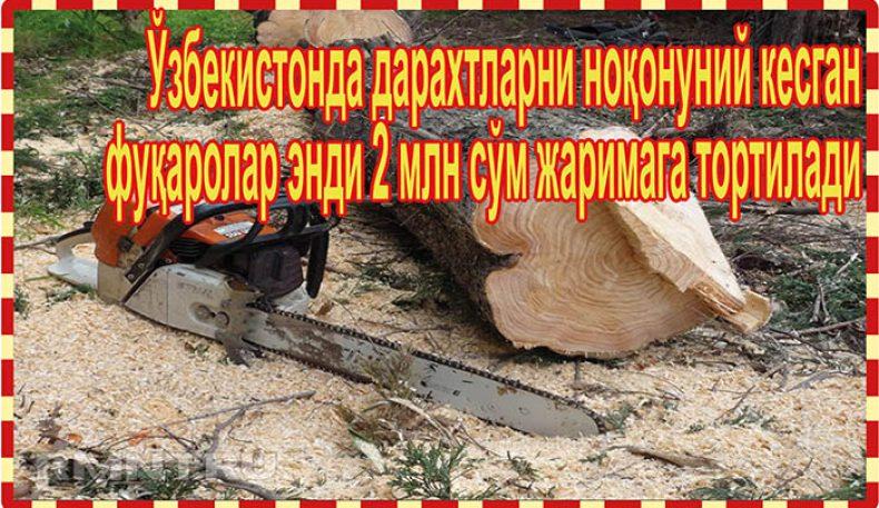 Ўзбекистонда дарахтларни ноқонуний кесган фуқаролар энди 2 млн сўм жаримага тортилади