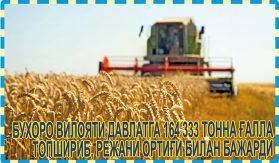 БУХОРО ВИЛОЯТИ ДАВЛАТГА 164333 ТОННА ҒАЛЛА ТОПШИРИБ, РЕЖАНИ ОРТИҒИ БИЛАН БАЖАРДИ