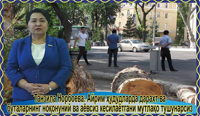 Танзила Норбоева: Айрим ҳудудларда дарахт ва буталарнинг ноқонуний ва аёвсиз кесилаётгани мутлақо тушунарсиз