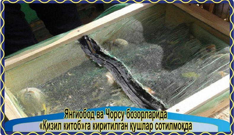 Янгиобод ва Чорсу бозорларида «Қизил китоб»га киритилган қушлар сотилмоқда